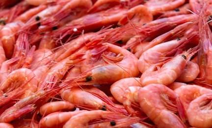 freshshrimp